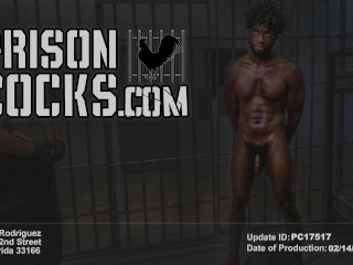 PRISON COCKS – Prisoners On A Field Trip, Paying Off Their Debt To Society